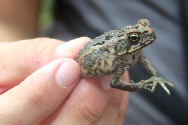 mr-frog