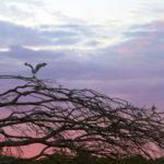 The Importance of Backyard Travel: Australian Travel Plans for 2017