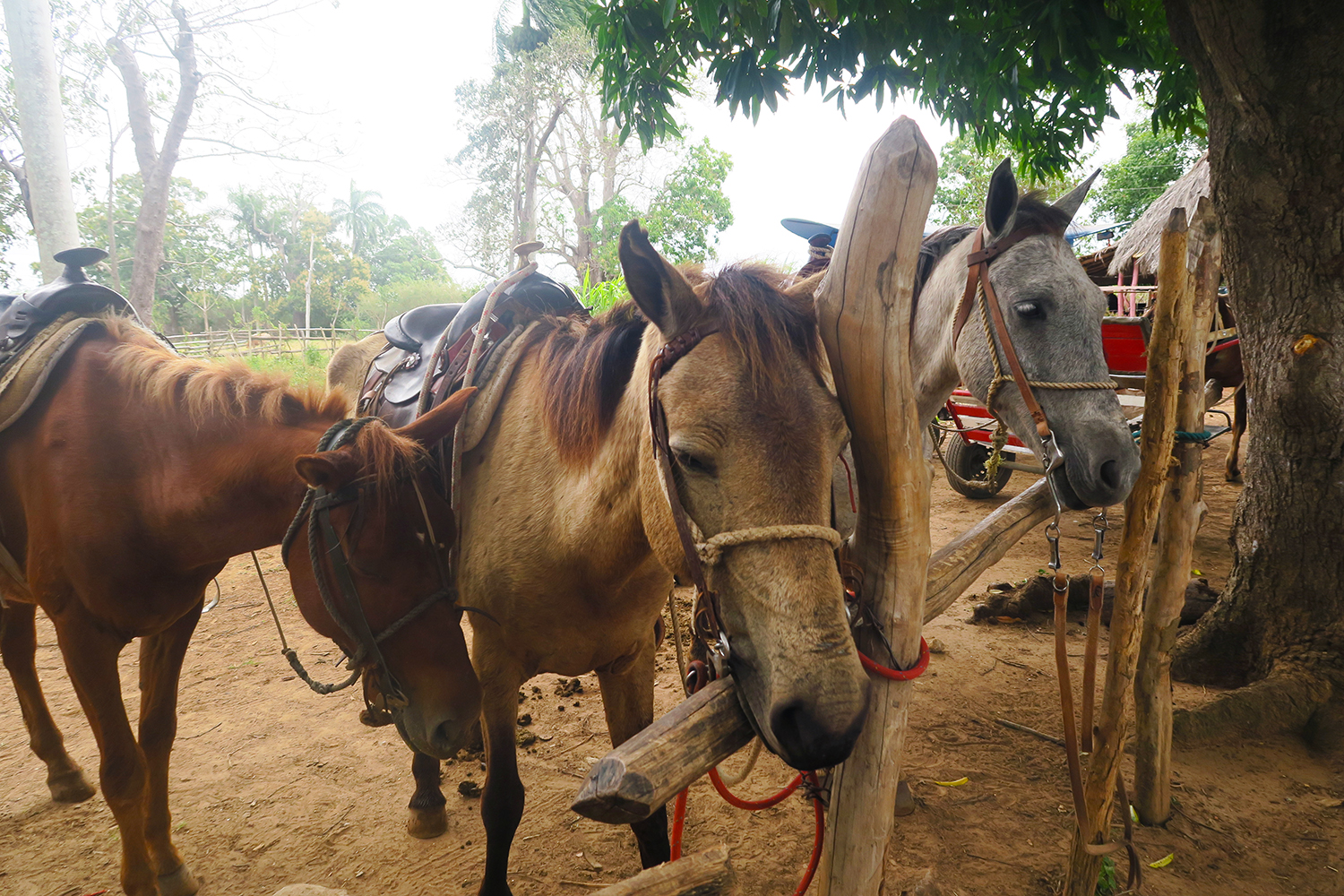 The Horse Ride From Hell in Trinidad, Cuba