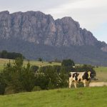 17 Highlights and Oddities From a Tasmanian Road Trip