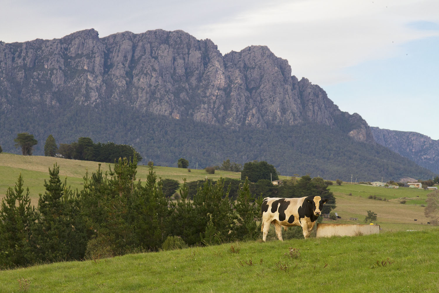 A Tasmanian Road Trip: 17 Highlights and Oddities