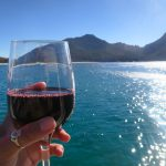 Wine Not? See Australian Marine Animals With Wineglass Bay Cruises in Tasmania