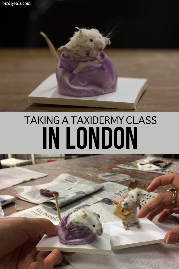 Looking for something different to do in London? Why not take an anthropomorphic mouse taxidermy class? It's not for the weak stomached, but it sure is a lot of fun. #London #Taxidermy #Travel