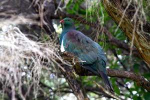 Why Birdnerds Should Visit Tiritiri Matangi Island in New Zealand
