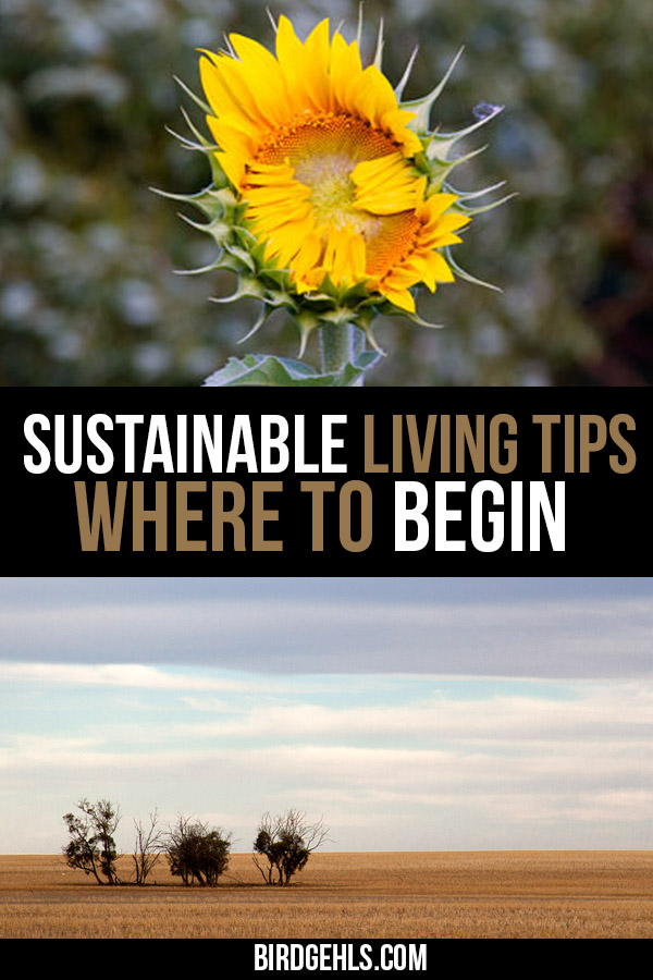 Sustainable living doesn't happen overnight. Yet, it is possible to change your lifestyle completely. Here are a few tips to get you started. / Sustainable Living Tips / Eco Lifestyle  / #ecoliving #sustainableliving #greenliving #ecolifestyle